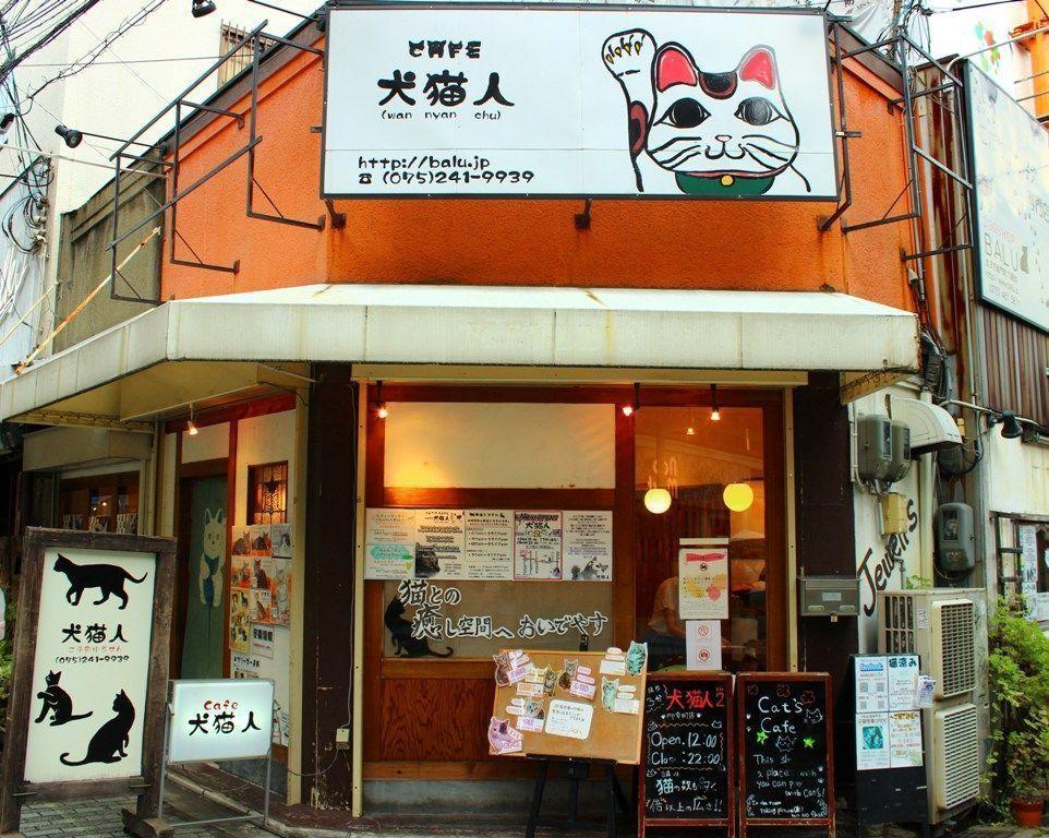 cafetería de gatos en Japón